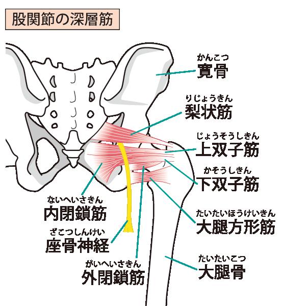 当院の変形性股関節症への対処法とは?