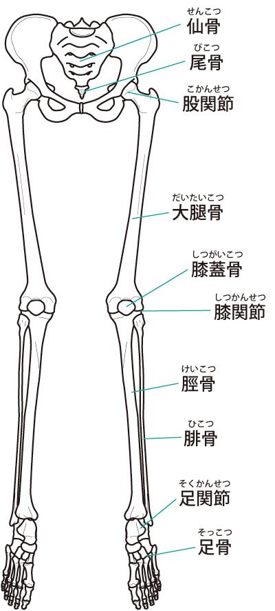 骨盤の矯正が産後の膝痛を改善に導きます。