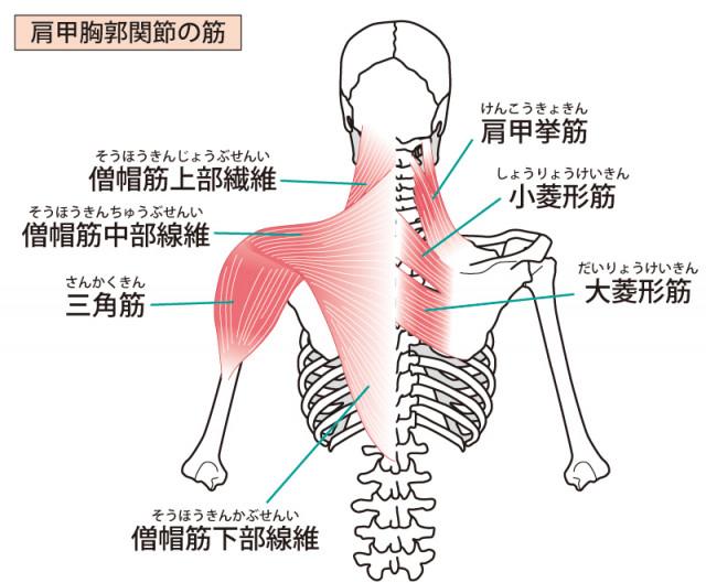 頸肩腕症候群への当院のアプローチは?