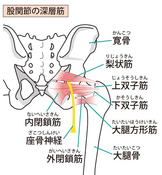 また関節の深層筋