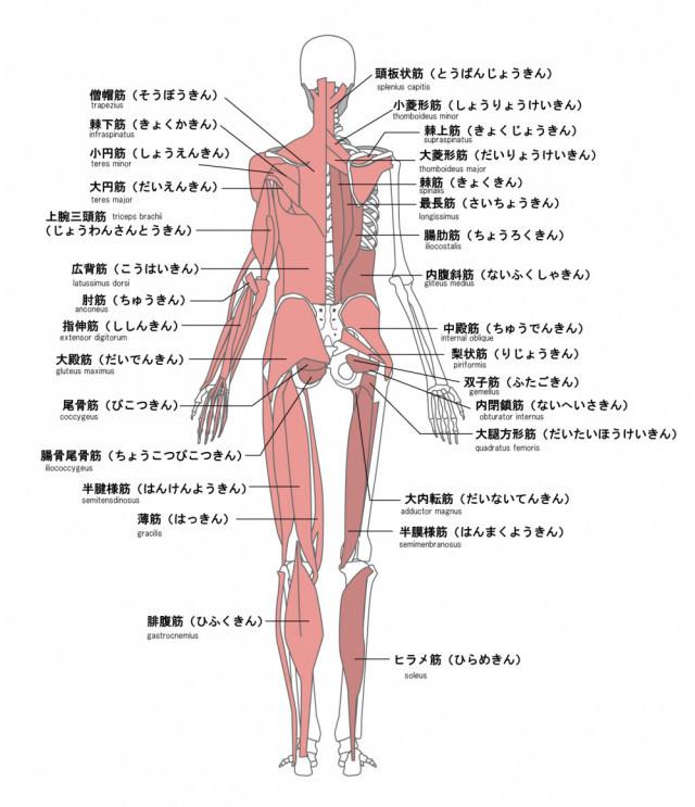 右側 痛み 背中 の